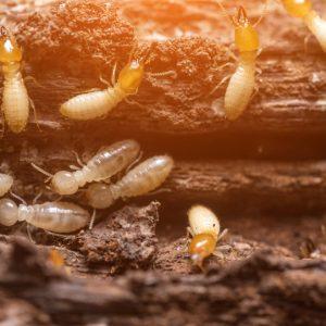 Anti termites